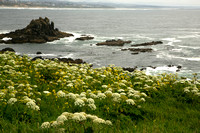 Yaquina Head View